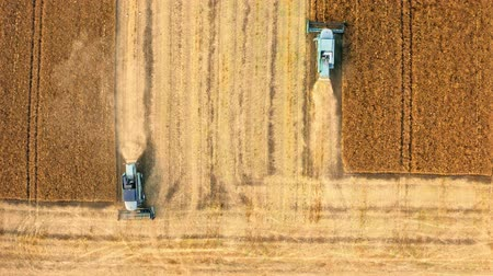 harvesting : Flying above two blue harvesters working on field, Poland