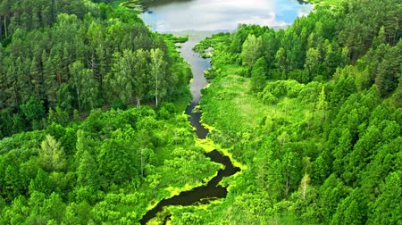pantanal : Small river and swamps in summer, aerial view of Poland Stock Footage