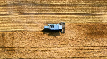 tahıllar : Top view of combine harvesting golden field, Poland Stok Video