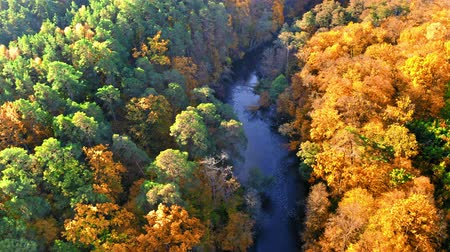 polska : Yellow forest and blue river in autumn, aerial view