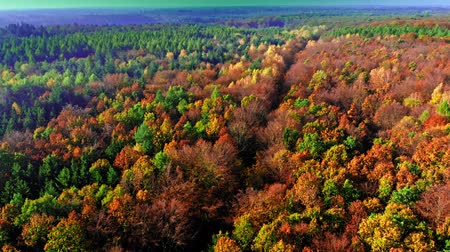 wilderness : Aerial view of autumn forest in Poland Stock Footage