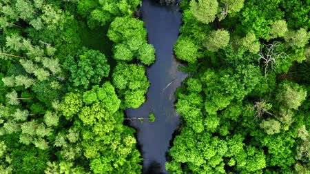 Green forest and blue river, aerial view of Poland