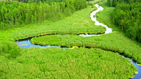 Small blue river and green swamp, Poland from above Stok Video