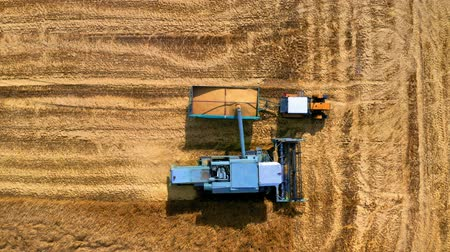 tahıllar : Top view of combine harvesting field in Poland