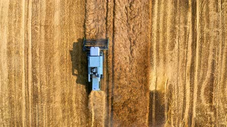tahıllar : Top down view of blue harvester working on field