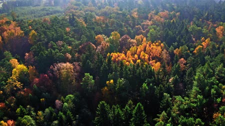wilderness : Top down view of forest in autumn, view from above Stock Footage