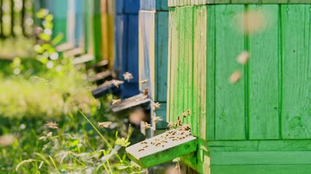 yabanarısı : Closeup of wooden beehives in the summer garden, Poland