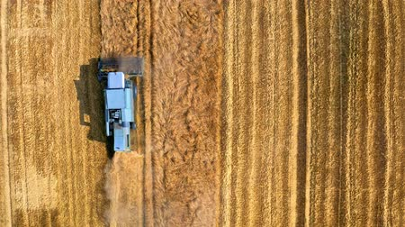 tahıllar : Top down view of blue harvester working on field, Poland