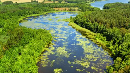 swamps : Green algae on the river and swamps in summer