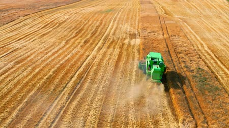 tahıllar : Flying above green combine working on golden field Stok Video