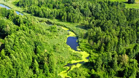 River and forest in natural park from above, Poland 무비클립