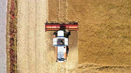 tahıllar : Top view of harvester working on field in Poland, Europe Stok Video