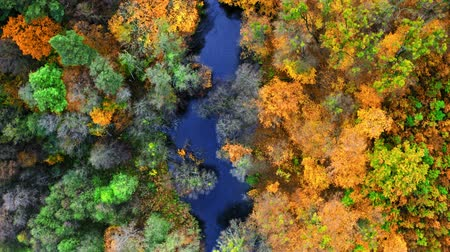 autumn leaves : Top view of blue river and yellow forest, aerial view Stock Footage