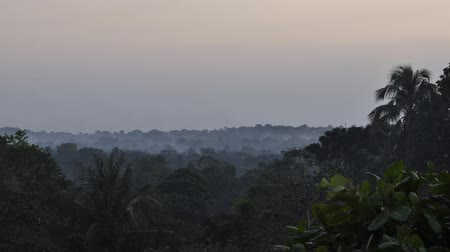Sunset time lapse in jungle Stok Video