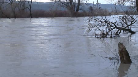 plunging : The river after the downpours. Flooding of river bank, trees after flood