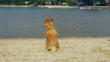 хот дог : A red-haired dog sits on the beach. Looks around....