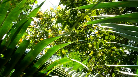 through leaves : palm leaves are a ray of sunshine