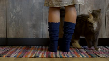 claw feet : Cute abyssinian cat asks a Woman for food