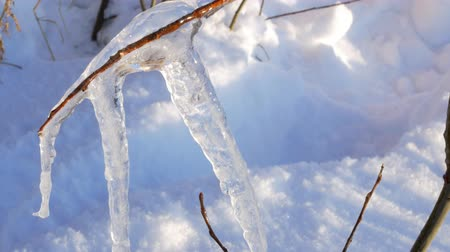 sincelo : Trees Seen through Dripping Icicles Stock Footage
