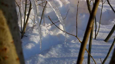 sincelo : Tree Branches With Melting Snow