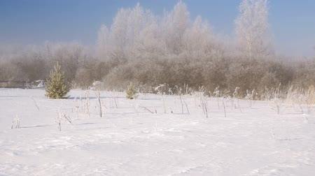 草で覆われた : Winter forest in the snow. Snow and large snowdrifts on the ground and the branches of trees In the countryside. 動画素材