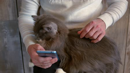 A man stroking a cat and using a smartphone Stock Footage