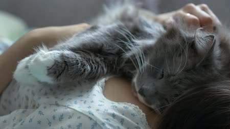 gray cat sleeps on the girl's chest. close-up Stock Footage