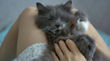 gray cat sleeps at the girl's legs Stock Footage