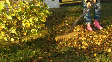 piled : Girl cleans autumn leaves in his yard under a tree