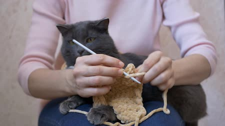 もつれた : The cat lies on the lap of a girl, bites a crochet hook