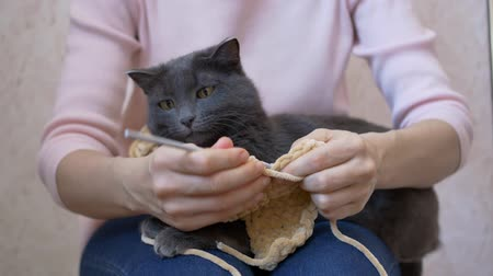 změť : The cat lies on the girl's lap, watches the crochet hook