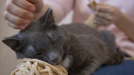 ronronar : The cat lies on a ball of thread from a girl who crochets Vídeos