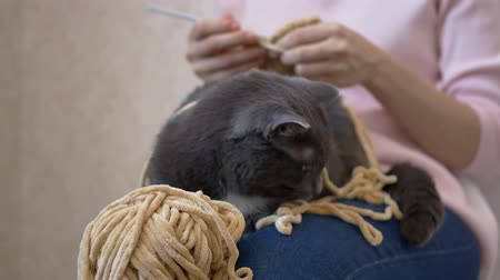 knitted : A gray cat lies on the girl's lap, prevents her from crocheting