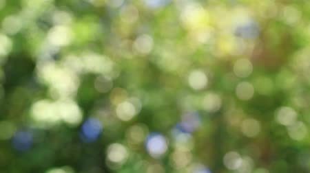Blurred green nature bokeh abstract background