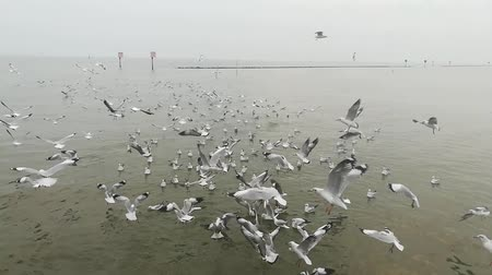 szibéria : seagulls migration at tourist attractions in Thailand Stock mozgókép