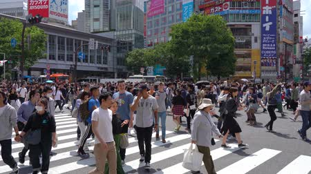 посетитель : Shibuya Crossing in day time (4K UHD time-lapse), camera long shot selective focus normal speed, pedestrians crosswalk a T Shibuya District. Tokyo, Japan