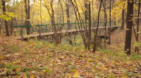 autumn : Wooden Arch Bridge at Park, backward rack focus Stock Footage