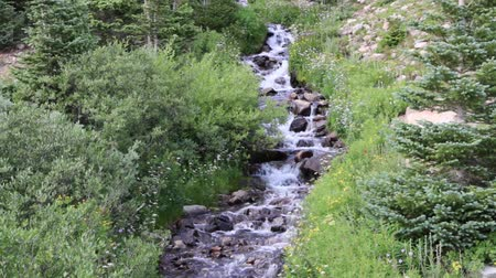 поток : Cascading Mountain Stream Tumbles Through Wildflowers and Pine Trees