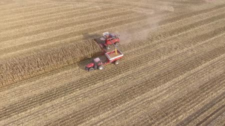 tahıllar : Amazing aerial 4k shot on big agriculture machine truck combine vehicle harvesting organic wheat crops from farm field Stok Video