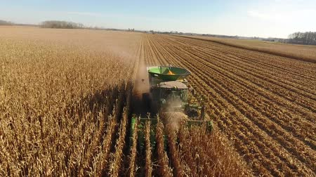 tahıllar : Aerial drone 4k view on huge agriculture combine machines trucks vehicles harvesting crops organic wheat on farm field Stok Video