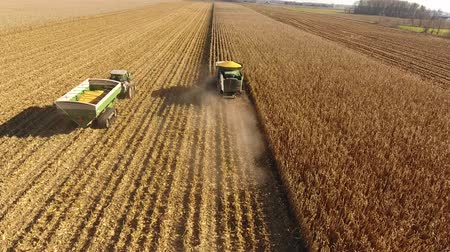 szalma : Aerial 4k drone shot of huge agriculture combine machines trucks vehicles harvesting crops organic wheat on farm field