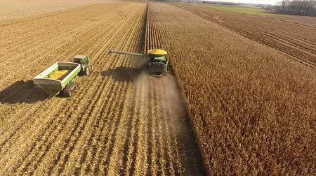 szalma : Drone 4k aerial shot of huge agriculture combine machines trucks vehicles harvesting crops organic wheat on farm field Stock mozgókép
