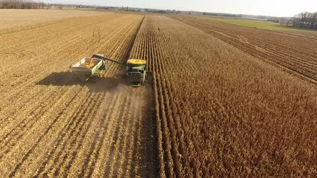 szalma : Drone aerial 4k shot of huge agriculture combine machines trucks vehicles harvesting crops organic wheat on farm field Stock mozgókép