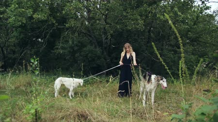tazı : girl in black dress with two Russian greyhounds Stok Video
