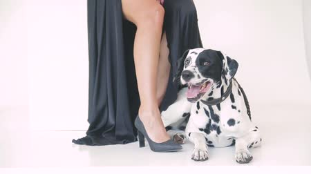 haft : beautiful attractive girl in a black dress with a Dalmatian dog posing for a photographer in the studio