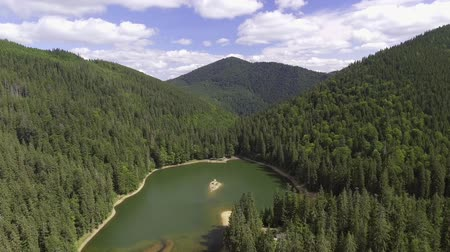 olhando a câmera : Summer mountain lake Sinevir in the Carpathian mountains