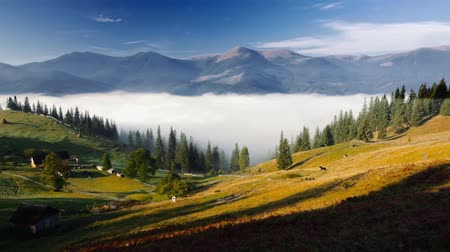 влажность : Mountains in Ukraine early morning with fog