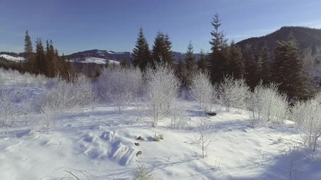 snowcapped : AERIAL: Flight over the forest in winter Stock Footage
