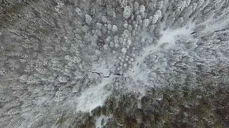 noruega : 4K. Flight above winter forest on the north, aerial top view.