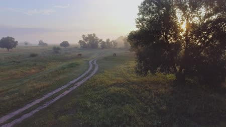 生態系 : foggy road. River valley bent early morning fog clouds. yellow orange sunrise horizon. Aerial drone beautiful Ukraine nature landscape. Romantic cinematic mood